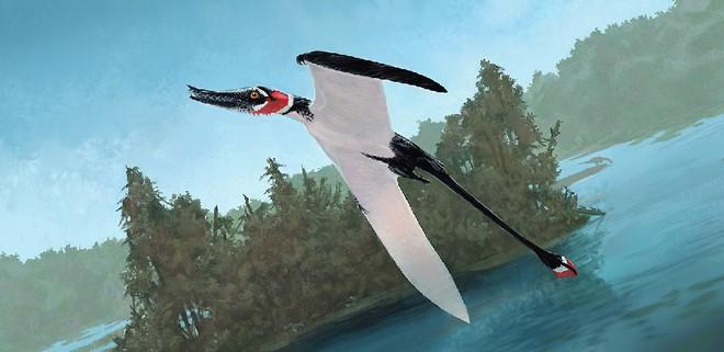 Rhamphorhynchus: Loài thằn lằn bay tí hon sở hữu hàm răng của tử thần - Ảnh 5.