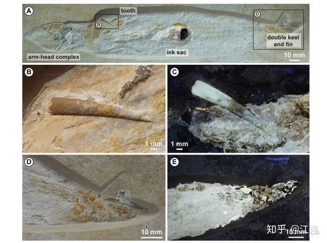 Rhamphorhynchus: Loài thằn lằn bay tí hon sở hữu hàm răng của tử thần - Ảnh 10.