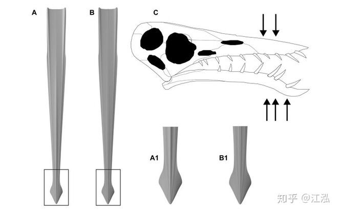 Rhamphorhynchus: Loài thằn lằn bay tí hon sở hữu hàm răng của tử thần - Ảnh 11.