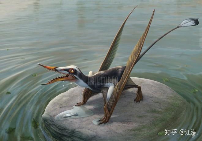 Rhamphorhynchus: Loài thằn lằn bay tí hon sở hữu hàm răng của tử thần - Ảnh 6.