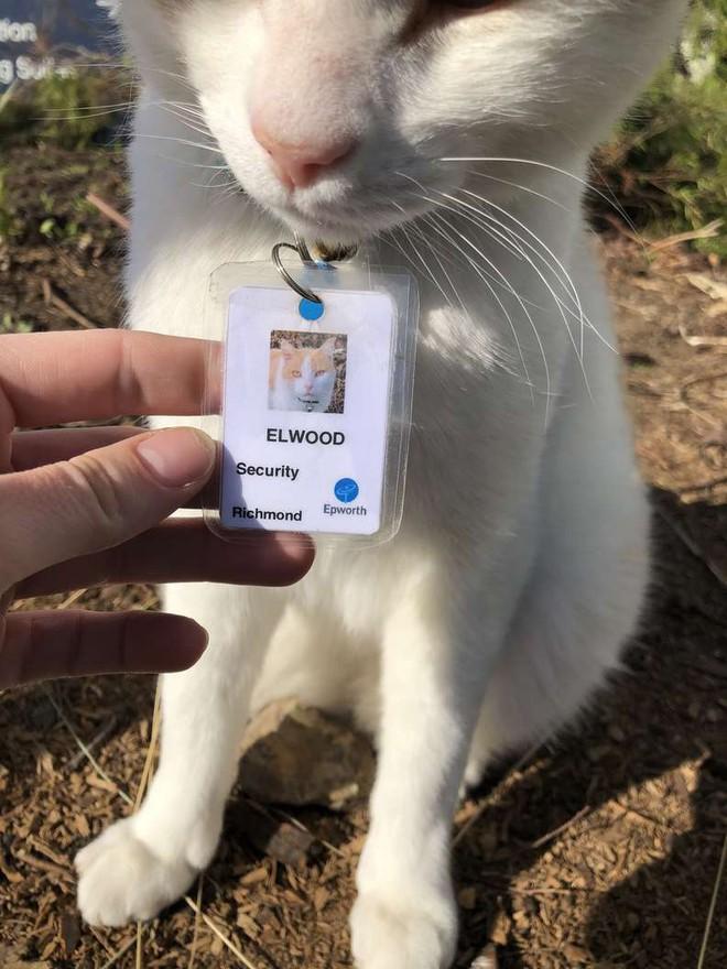 """Chú mèo hoang được tuyển vào làm nhân viên chính thức sau 1 thời gian """"mặt dày"""" lang thang trong khuôn viên bệnh viện - Ảnh 3."""
