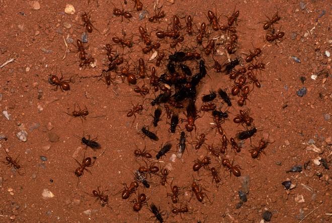 Kiến và ong có thể dạy chúng ta điều gì về cách phòng chống dịch bệnh? - Ảnh 1.