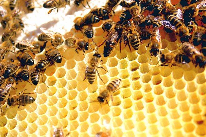 Kiến và ong có thể dạy chúng ta điều gì về cách phòng chống dịch bệnh? - Ảnh 2.