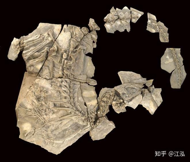 Loài khủng long ăn thịt có bướu kỳ lạ được tìm thấy ở Tây Ban Nha - Ảnh 5.