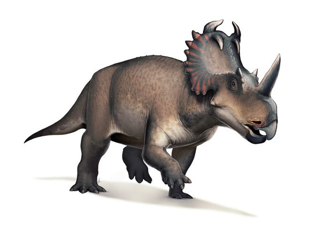 Lần đầu tiên các nhà khoa học phát hiện một con khủng long bị ung thư - Ảnh 1.