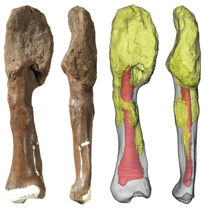 Lần đầu tiên các nhà khoa học phát hiện một con khủng long bị ung thư - Ảnh 2.
