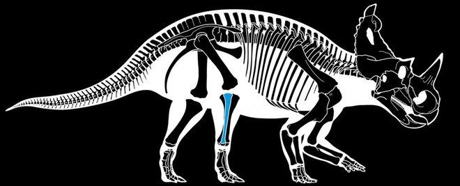 Lần đầu tiên các nhà khoa học phát hiện một con khủng long bị ung thư - Ảnh 3.