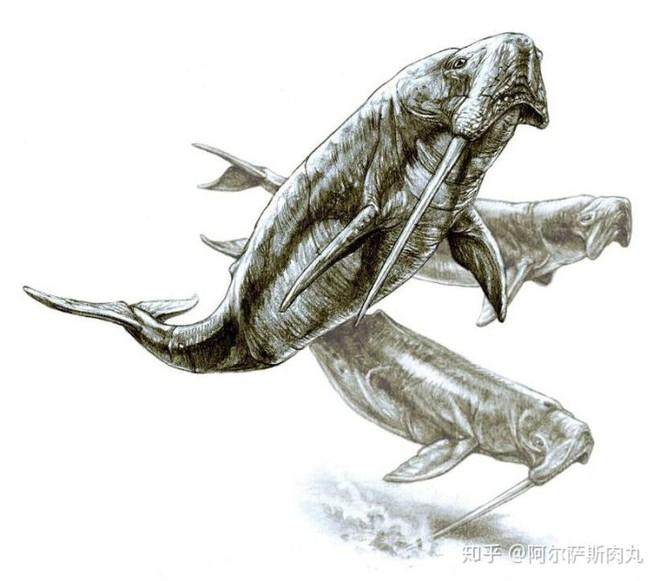 Odobenocetops: Loài cá voi kỳ lạ có cặp ngà bên dài bên ngắn - Ảnh 1.