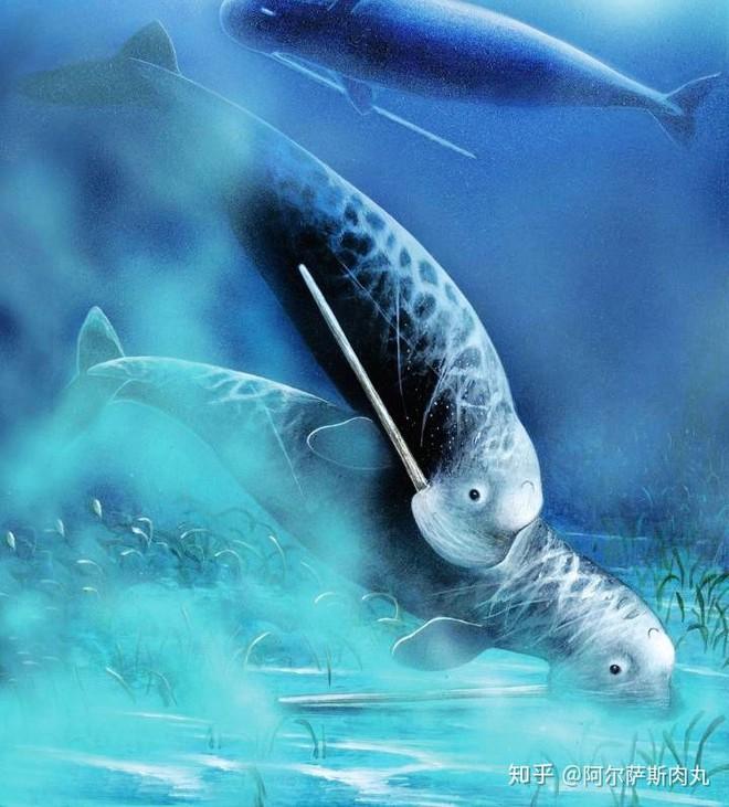 Odobenocetops: Loài cá voi kỳ lạ có cặp ngà bên dài bên ngắn - Ảnh 4.