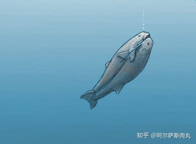 Odobenocetops: Loài cá voi kỳ lạ có cặp ngà bên dài bên ngắn - Ảnh 7.