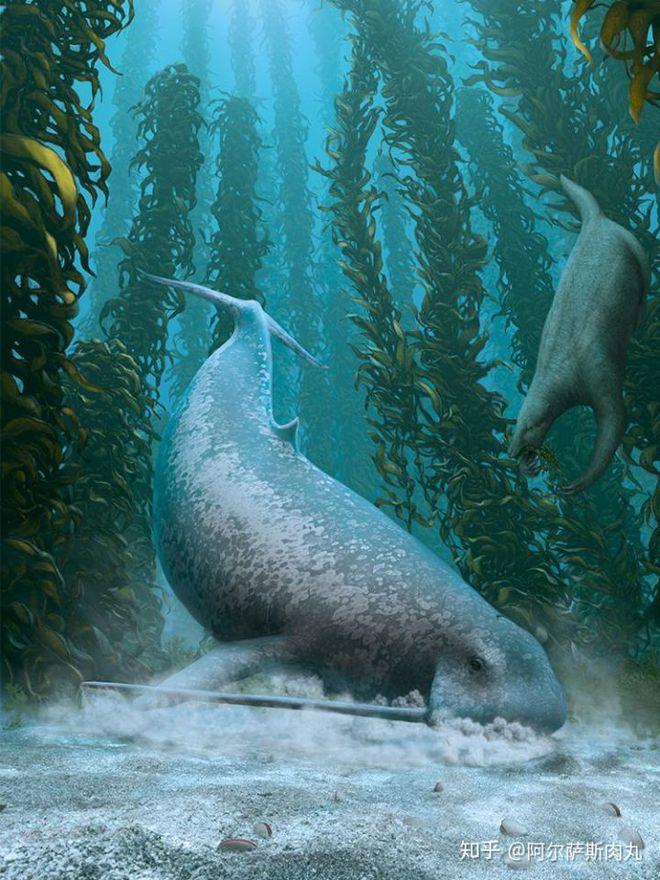Odobenocetops: Loài cá voi kỳ lạ có cặp ngà bên dài bên ngắn - Ảnh 6.