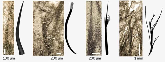 Nguồn gốc của lông vũ có thể sớm hơn nhưng gì chúng ta vẫn biết và cũng không liên quan gì đến việc bay - Ảnh 6.