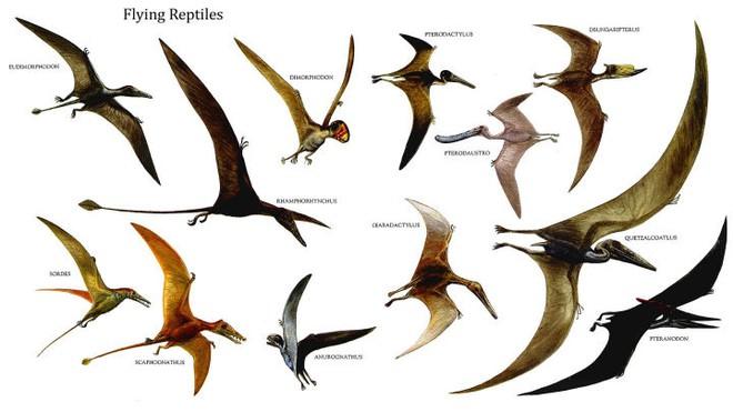 Nguồn gốc của lông vũ có thể sớm hơn nhưng gì chúng ta vẫn biết và cũng không liên quan gì đến việc bay - Ảnh 1.