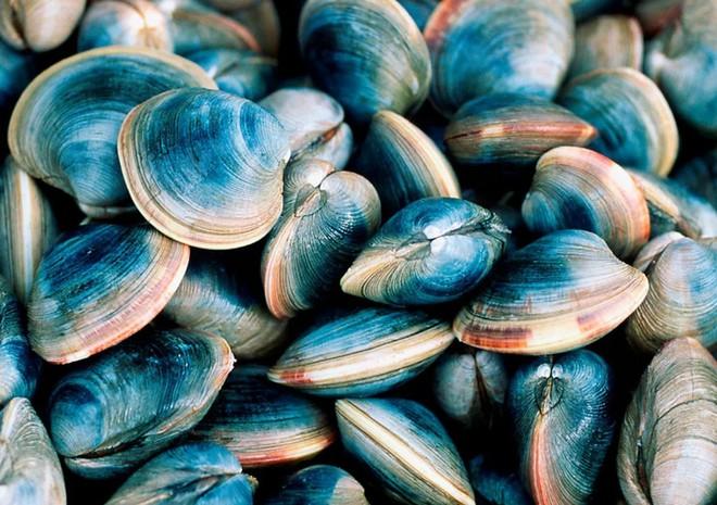 Nước biển ấm lên đe dọa các loài sinh vật biển có vỏ vì chúng không thể thoát đi đâu được ngoài bị kẹt ở vùng nước ấm - Ảnh 1.