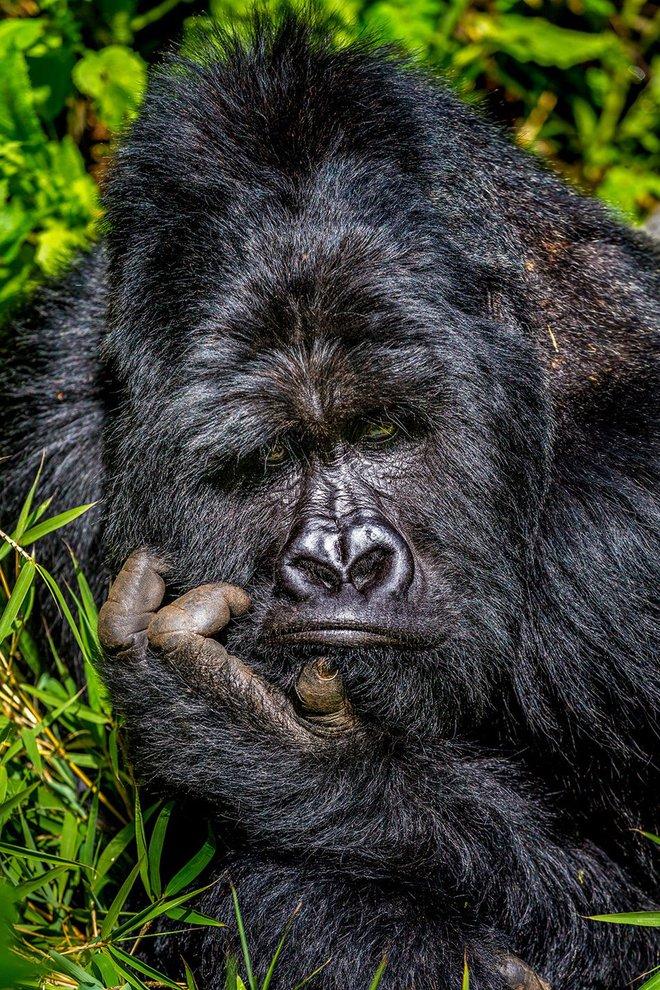 Chết cười với những tác phẩm lọt vào vòng chung kết cuộc thi nhiếp ảnh động vật hài hước nhất thế giới - Ảnh 1.
