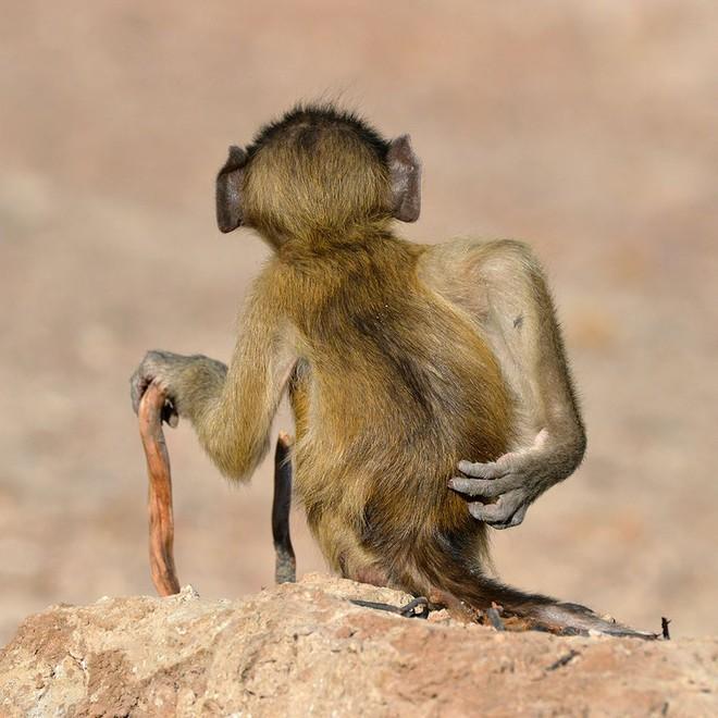 Chết cười với những tác phẩm lọt vào vòng chung kết cuộc thi nhiếp ảnh động vật hài hước nhất thế giới - Ảnh 10.