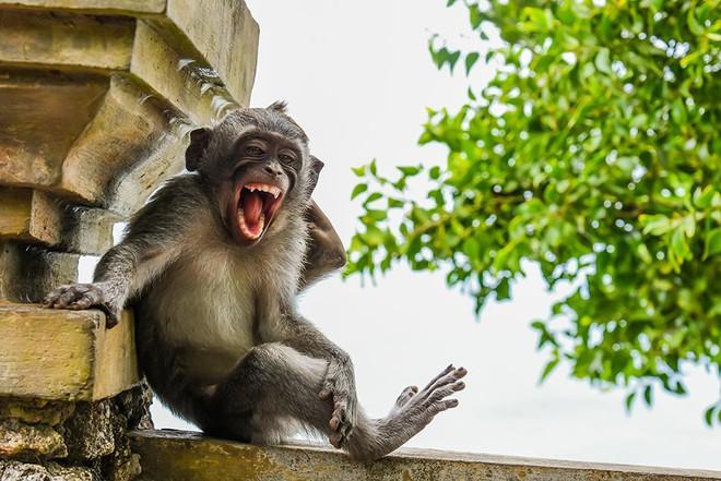 Chết cười với những tác phẩm lọt vào vòng chung kết cuộc thi nhiếp ảnh động vật hài hước nhất thế giới - Ảnh 15.