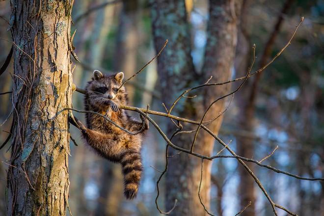Chết cười với những tác phẩm lọt vào vòng chung kết cuộc thi nhiếp ảnh động vật hài hước nhất thế giới - Ảnh 16.