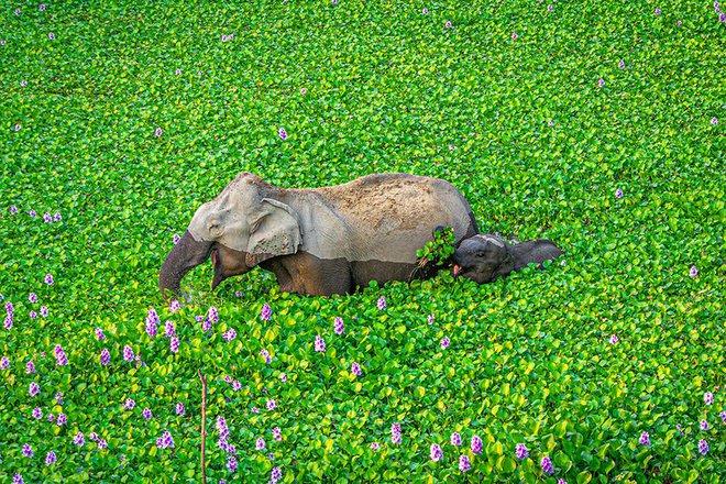 Chết cười với những tác phẩm lọt vào vòng chung kết cuộc thi nhiếp ảnh động vật hài hước nhất thế giới - Ảnh 2.