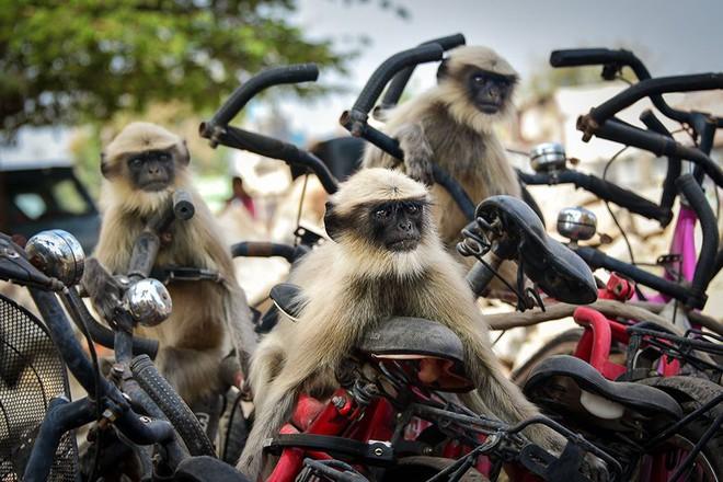 Chết cười với những tác phẩm lọt vào vòng chung kết cuộc thi nhiếp ảnh động vật hài hước nhất thế giới - Ảnh 29.