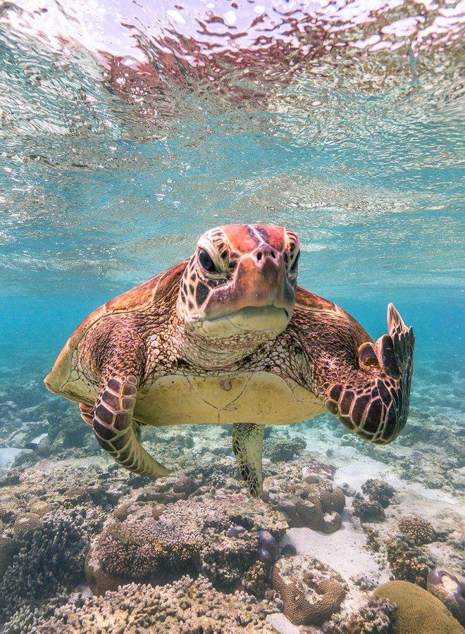 Chết cười với những tác phẩm lọt vào vòng chung kết cuộc thi nhiếp ảnh động vật hài hước nhất thế giới - Ảnh 3.