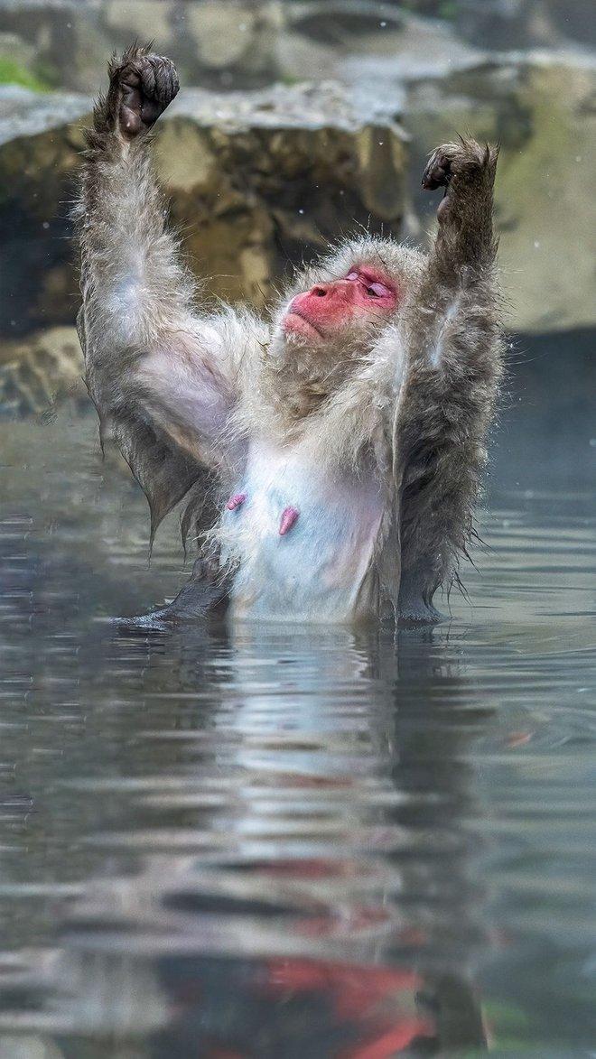 Chết cười với những tác phẩm lọt vào vòng chung kết cuộc thi nhiếp ảnh động vật hài hước nhất thế giới - Ảnh 4.