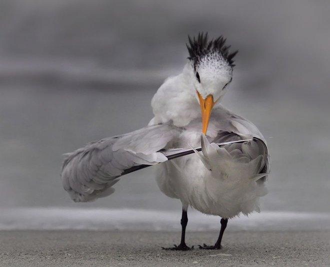 Chết cười với những tác phẩm lọt vào vòng chung kết cuộc thi nhiếp ảnh động vật hài hước nhất thế giới - Ảnh 40.