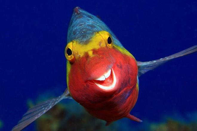 Chết cười với những tác phẩm lọt vào vòng chung kết cuộc thi nhiếp ảnh động vật hài hước nhất thế giới - Ảnh 41.