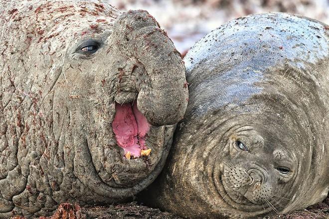 Chết cười với những tác phẩm lọt vào vòng chung kết cuộc thi nhiếp ảnh động vật hài hước nhất thế giới - Ảnh 7.