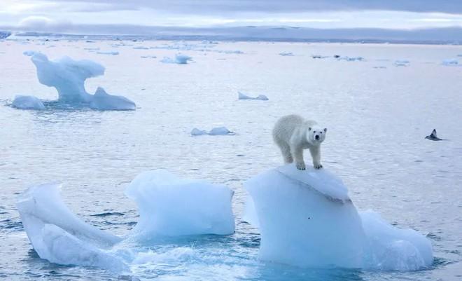 Một khối băng rộng hơn thành phố Paris vừa vỡ ra khỏi Bắc Cực, các nhà khoa học lo sợ đó là một phản ứng dây chuyền - Ảnh 4.