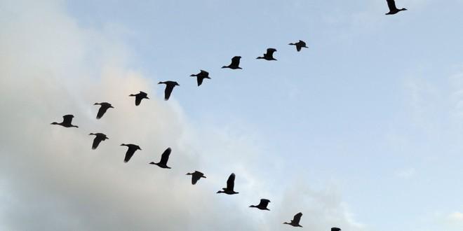 Nghiên cứu này của Airbus mà thành công, máy bay dân dụng trong tương lai sẽ bay theo đàn như chim di cư - Ảnh 1.