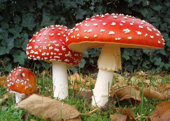 Tại sao hầu hết các loại nấm đều phát triển các chất gây ảo giác? - Ảnh 1.
