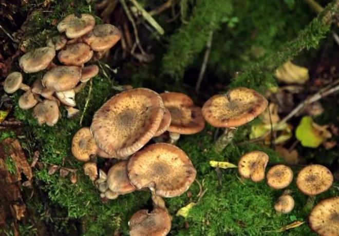 Tại sao hầu hết các loại nấm đều phát triển các chất gây ảo giác? - Ảnh 3.