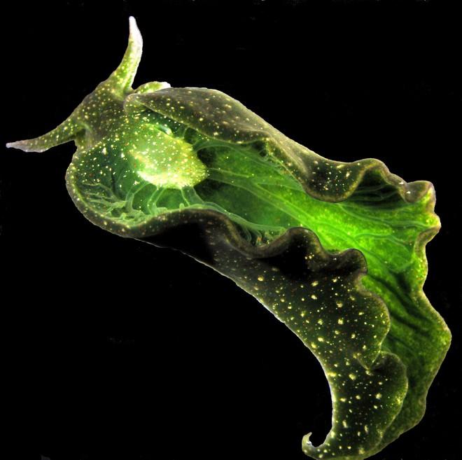 Nếu như bạn vẫn không biết tẹo nữa ăn gì thì đây là loài động vật chỉ cần phơi người ra nắng cũng có thể no căng bụng - Ảnh 5.