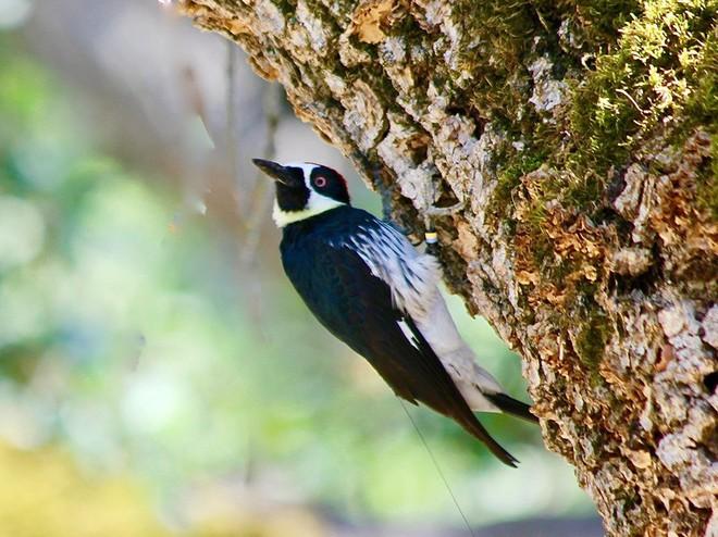 Loài chim này lập liên minh để đánh nhau giành lãnh thổ, và hàng xóm bay đến từ khắp nơi để xem trộm - Ảnh 2.