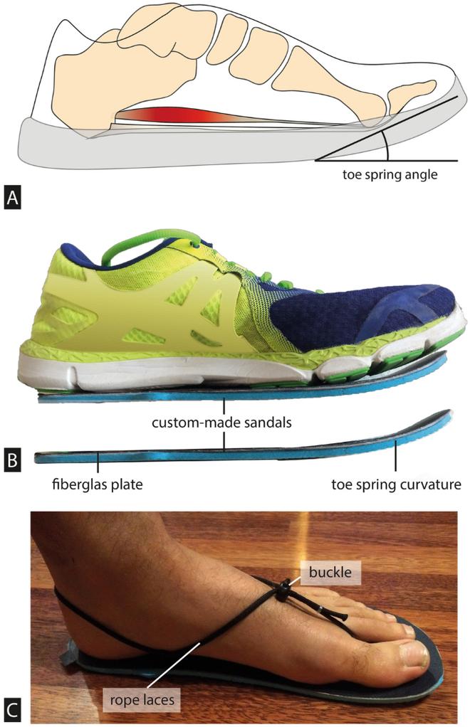Những đôi giày có đế cong lên ở mũi chân đang dẫn chúng ta đi ngược chiều tiến hóa - Ảnh 1.