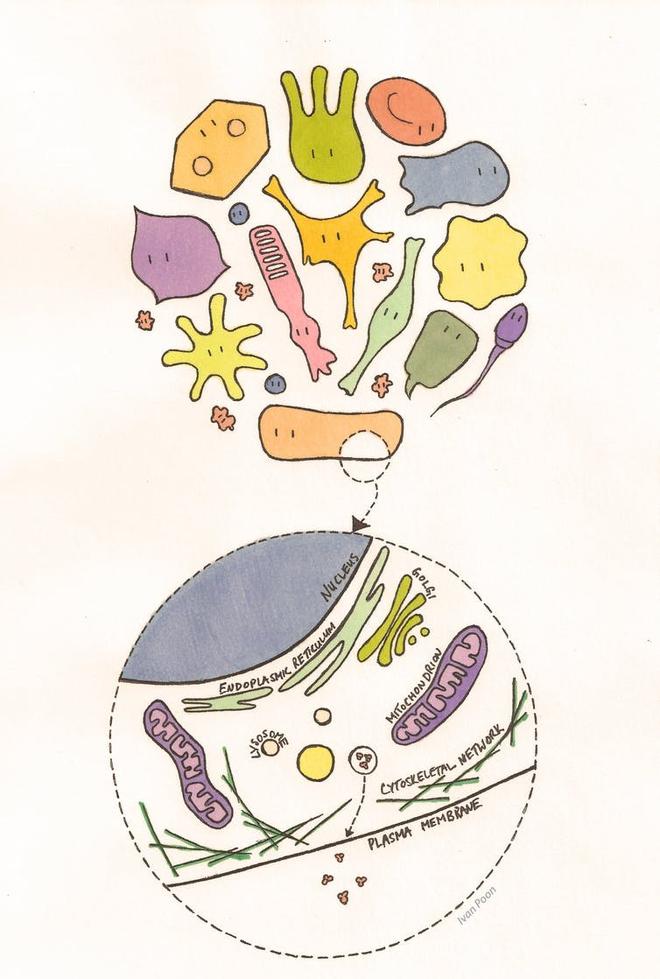 Làm sao để giải thích cho một đứa trẻ 4 tuổi hiểu: Tế bào là gì? - Ảnh 1.