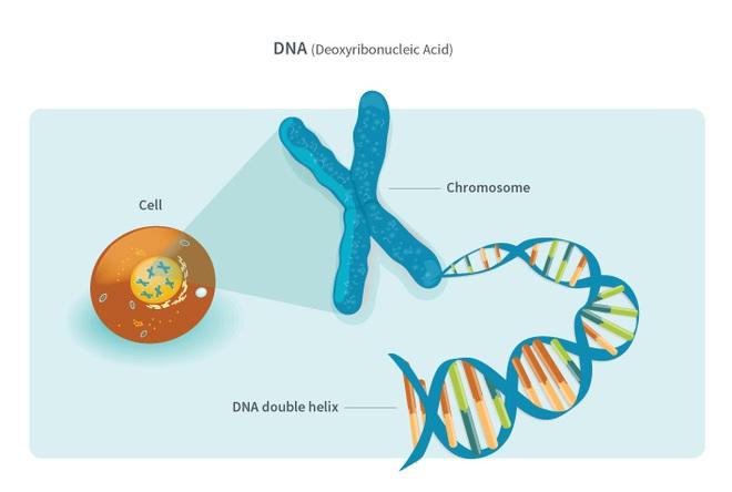 Làm sao để giải thích cho một đứa trẻ 4 tuổi hiểu: Tế bào là gì? - Ảnh 4.