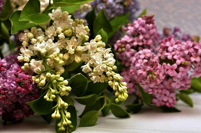 Nhìn những bông hoa mềm mại như thật thế này, bạn sẽ không thể ngờ chất liệu tạo nên chúng là gì đâu! - Ảnh 5.