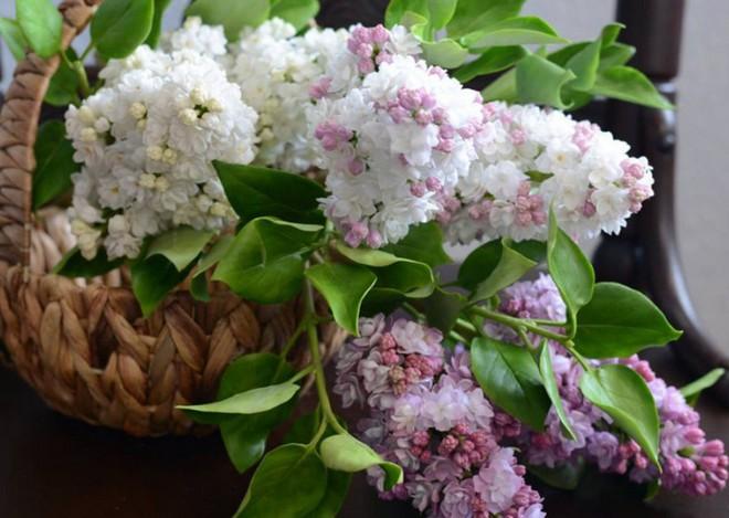 Nhìn những bông hoa mềm mại như thật thế này, bạn sẽ không thể ngờ chất liệu tạo nên chúng là gì đâu! - Ảnh 4.