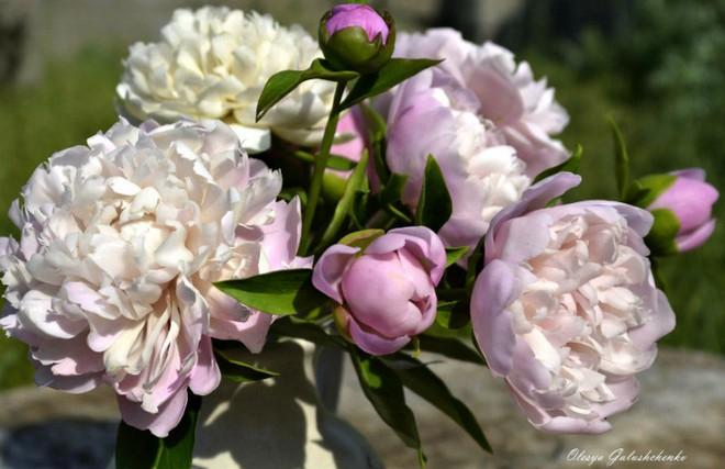 Nhìn những bông hoa mềm mại như thật thế này, bạn sẽ không thể ngờ chất liệu tạo nên chúng là gì đâu! - Ảnh 8.