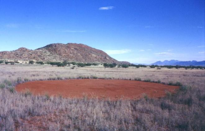 Bí ẩn về những vòng tròn cổ tích tại Namibia - Ảnh 2.
