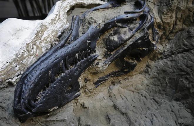 Bí ẩn hai chú khủng long mắc kẹt trong hoá thạch sau cuộc chiến sinh tử làm đau đầu các nhà khoa học - Ảnh 2.