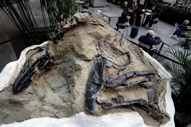 Bí ẩn hai chú khủng long mắc kẹt trong hoá thạch sau cuộc chiến sinh tử làm đau đầu các nhà khoa học - Ảnh 1.