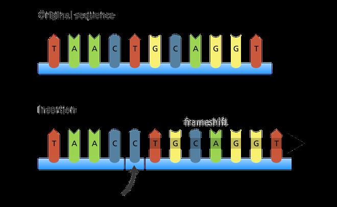 Giải thích con đường biến chủng của virus SARS-CoV-2 bằng kiến thức sinh học lớp 9 - Ảnh 5.