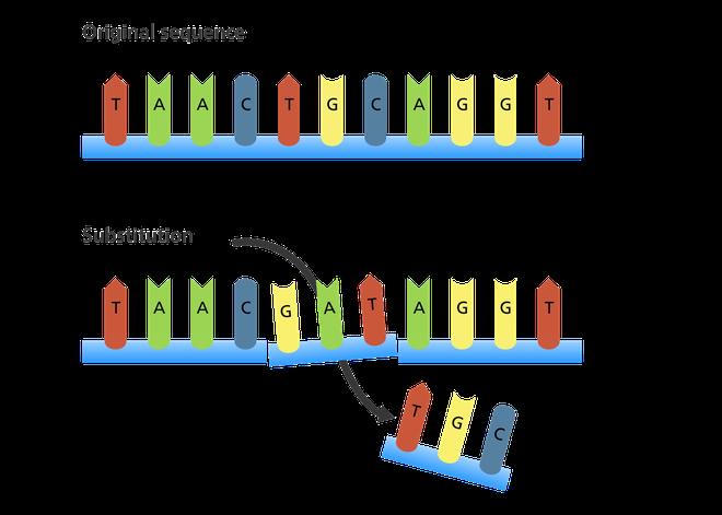 Giải thích con đường biến chủng của virus SARS-CoV-2 bằng kiến thức sinh học lớp 9 - Ảnh 3.