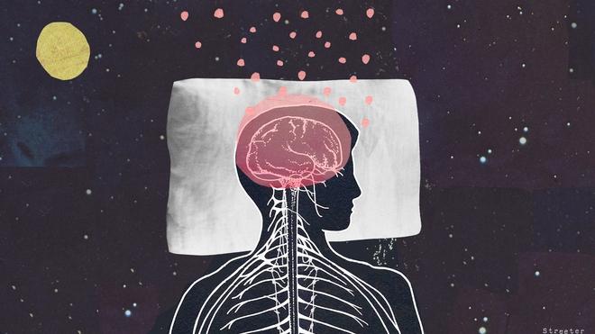 Cái nào có trước: Giấc ngủ hay Bộ não? Các nhà khoa học cho rằng họ đã tìm ra câu trả lời - Ảnh 1.