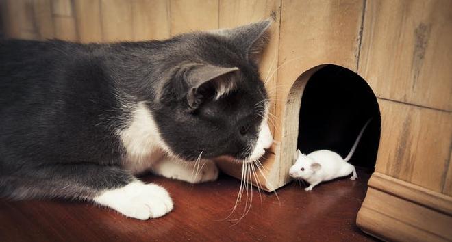 Nghiên cứu: Một chủng vi khuẩn trên mèo có liên quan đến nguy cơ ung thư não trên người - Ảnh 1.