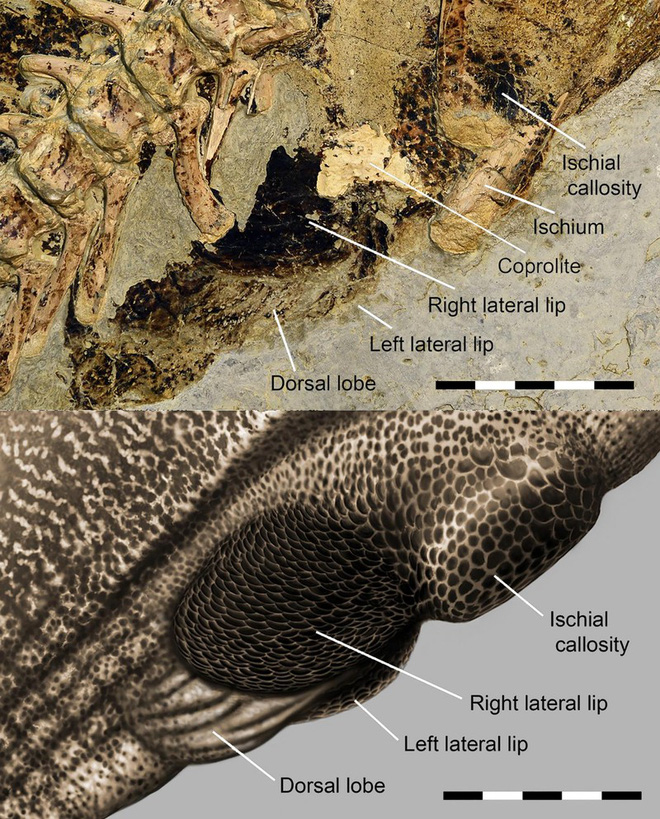Cuối cùng thì giới cổ sinh vật học cũng đã tìm ra được cần tăng dân số của khủng long - Ảnh 3.