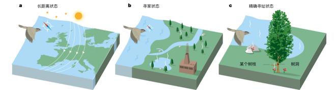 Khoa học cho rằng loài chim dựa vào trường địa từ để điều hướng, nhưng thực tế chúng sử dụng cơ học lượng tử? - Ảnh 1.